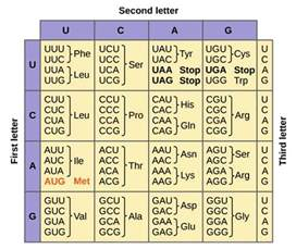 genetic code properties of genetic code table and exceptions