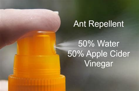 ant killer remedies ways to repel ants effectively
