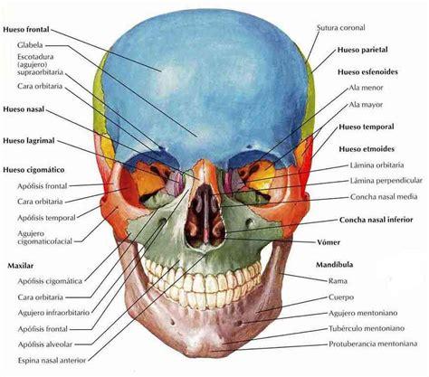 de la cabeza a partes de la cabeza