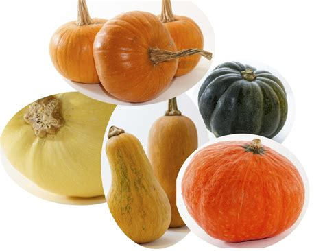types of orange squash www pixshark com images galleries with a bite