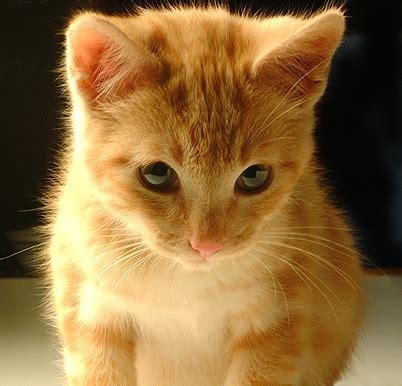 imagenes geniales de gatos fotos de gatos taringa