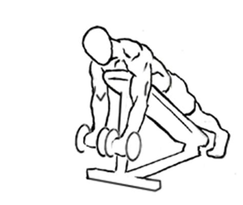 incline bench bicep curls prone incline bicep curl learn this bicep curl variation