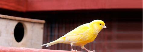 canary care sheet supplies petsmart