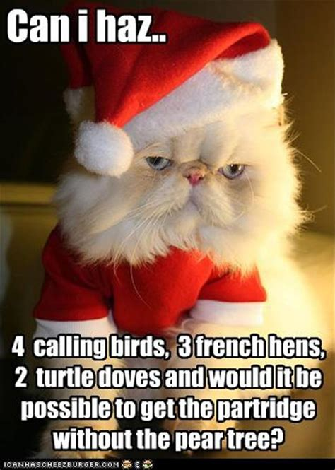 Christmas Cat Meme - funny christmas cat dump a day