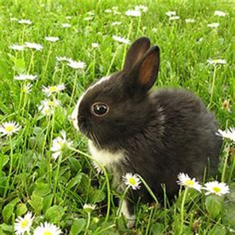 how to get rid of rabbits in your backyard 1000 images about gardening tips tricks on pinterest gardening tips gardening