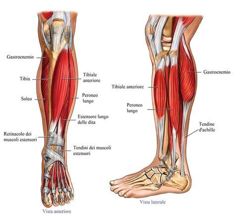 dolore arco plantare interno infiammazione tendine tibiale runner store