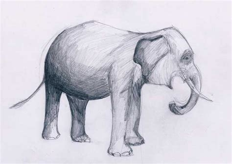 desain gambar gajah belajar menggambar