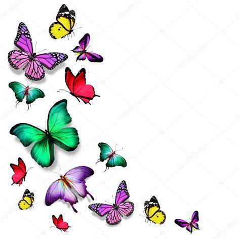imagenes animadas de mariposas volando muchos colores diferentes mariposas volando foto de