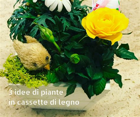 cassette per piante 3 idee di piante in cassette di legno idee fiorite