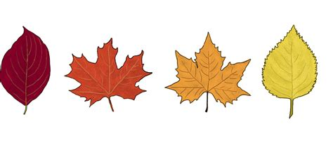 how do leaves change color why do tree leaves change color in the fall thatsy