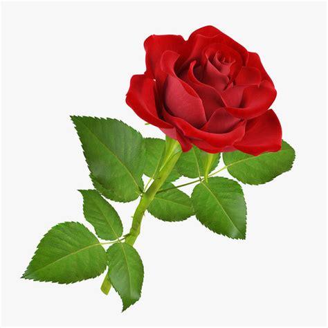 imagenes de rosas solas el trato a alemania