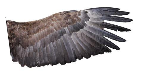 imagenes reales red wings was v 246 gel ausmacht biologie artikel 187 serlo org
