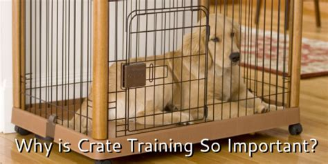 crate training best way to train dogs