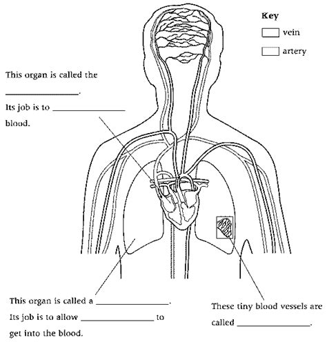 33 3 the respiratory system worksheet answers the circulatory system worksheet answers deployday