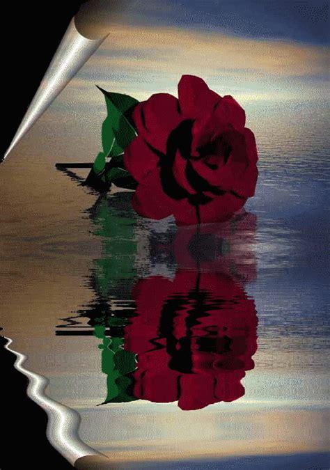 imagenes rosas hermosas animadas imagenes animadas de rosas gif imagui