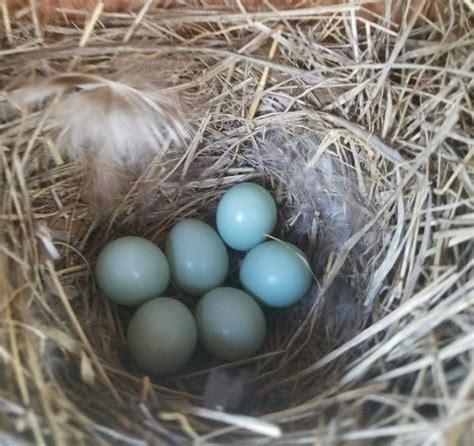 bluebirds patchwork times by judy laquidara