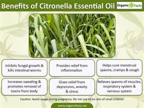 15 incredible benefits of citronella essential oil