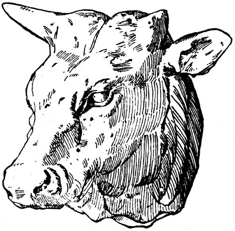 ox head clipart