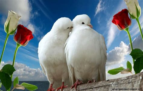 free download images of love birds amazing wallpapers free download images of love birds amazing wallpapers