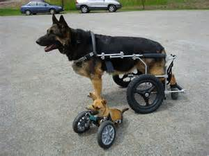 wheel chairs for dogs cost of a wheelchair cart quality of