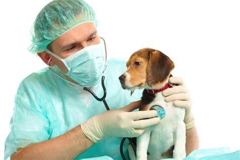 imagenes de medicas veterinarias c 243 mo hacer que mi perro pierda el miedo a ir al