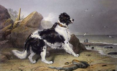 boatswain a dog pauline s pirates privateers history gone to the dogs