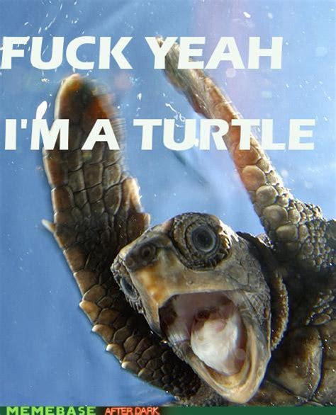 Funny Turtle Memes - mrorange16 images turtle ftw wallpaper and background