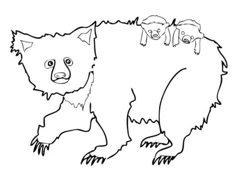 spectacled bear coloring page 78 spectacled bear coloring page spectacled bear