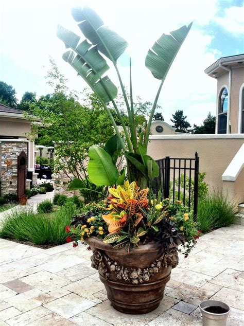 tropical container garden tropical container container gardening