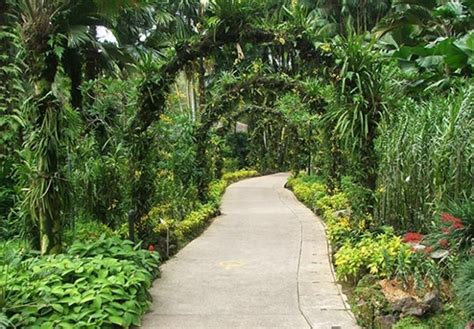 Small Tropical Garden Ideas Tropical Garden Design Ideas Home Garden Design