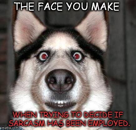 Scared Face Meme - scared dog imgflip