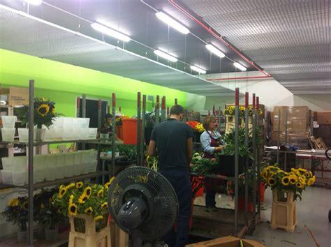 mercato dei fiori barcellona dietro le quinte di floraqueen floraqueen italia
