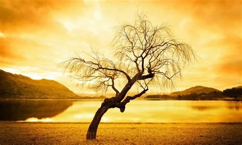 wallpaper free tree abstract tree hd wallpapers hd wallpapers high