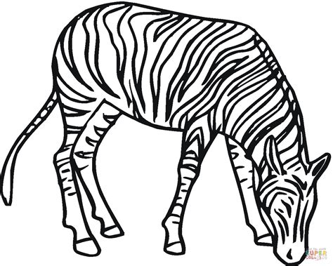 zebra face coloring page zebra coloring page free printable coloring pages