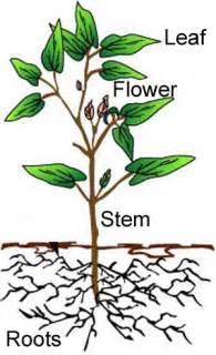 drawing scientific diagrams yr 8 middle 2012