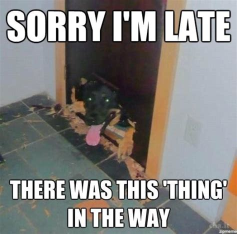 Memes About Being Sorry - lol funny animals meme memes dogs poyzn