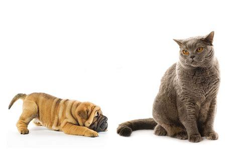 regarder oscar et le monde des chats regarder streaming vf en france shar pei chiot et chat regarder milieux mobiles beaux
