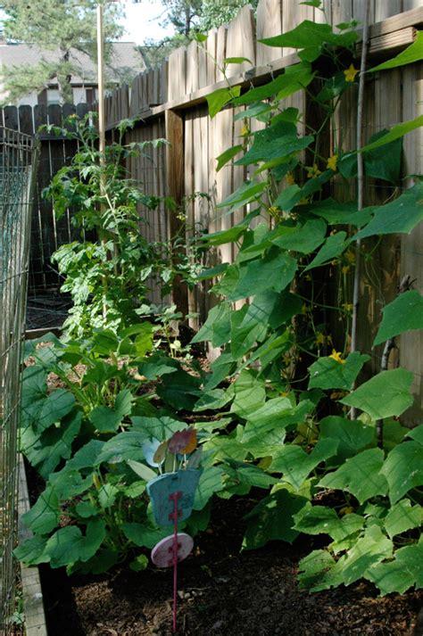 Vertical Cucumber Garden Finders Keepers