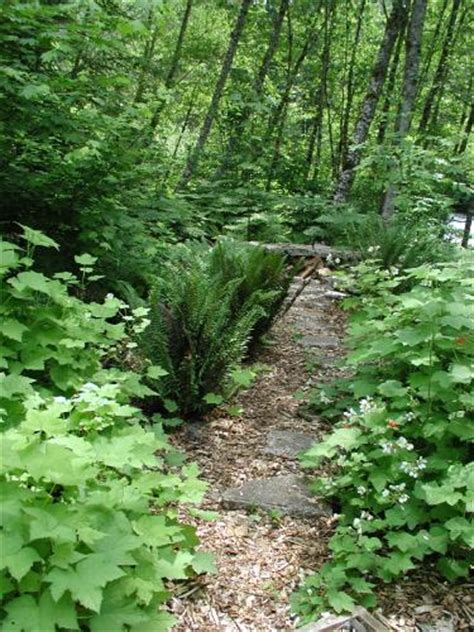 woodland garden landscaping with pacific nw native plants garden pinterest woodland