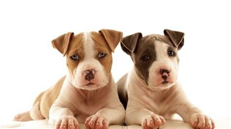 backyard breeder laws petition 183 government stop backyard breeders 183 change org