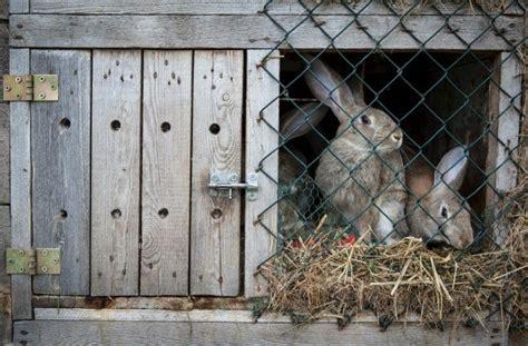 homemade rabbit cages thriftyfun