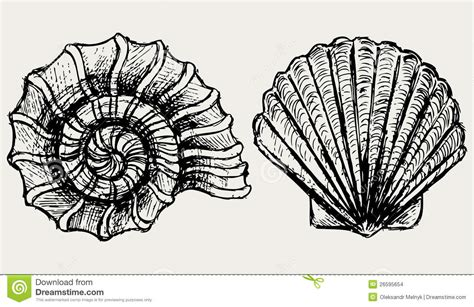 sea snail  scallop shell stock images image
