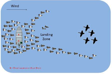 layout boat for geese duck decoy spreads hunting big lakes open water