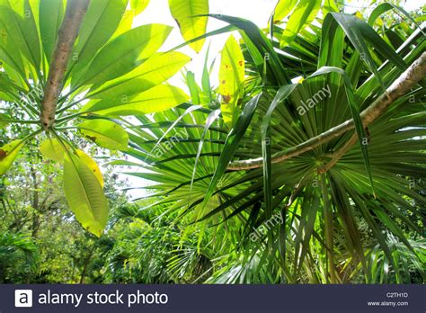 Ambiance Jungle Tropicale by Tropical Jungle Photos Tropical Jungle Images Alamy