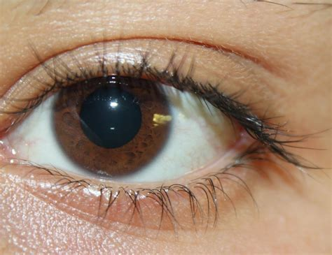 who has the dominant gene for eye color eye color pentucket profile