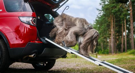 land rover launches  pet packs   furry  legged passengers carscoops