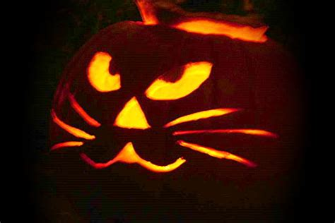 easy cat pumpkin carving