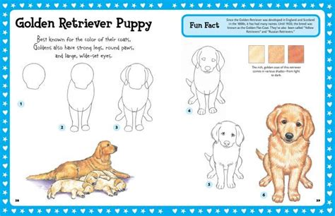 how to draw a golden retriever easy how to draw a golden retriever puppy step by learn puppys in litle pups