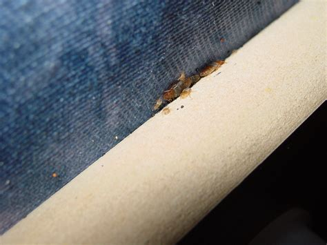 bed bugs headboard bed bug treatment and information