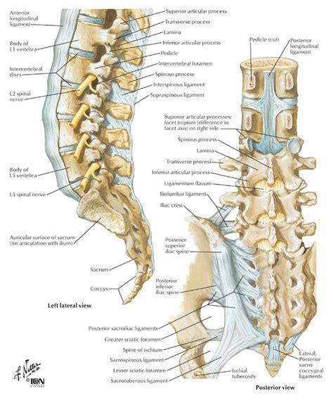 lumbar spine diagram lumbar spine and ligaments